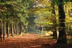 Melton Dog Walk